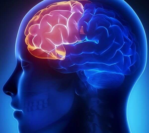 สมองส่วนหน้าFrontal-lobe